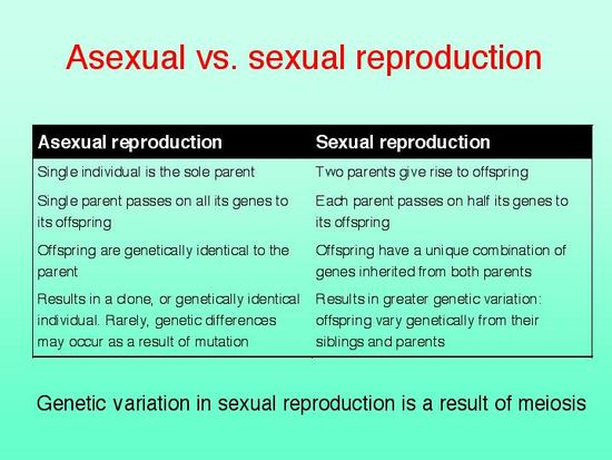 asexual reproduction essay We will write a custom essay sample on biology - cell division & reproduction notes which of the following methods of asexual reproduction cannot occur in a.